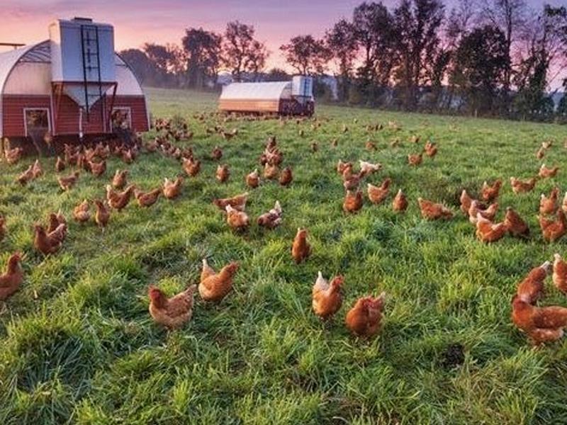 Melen Çiftliği